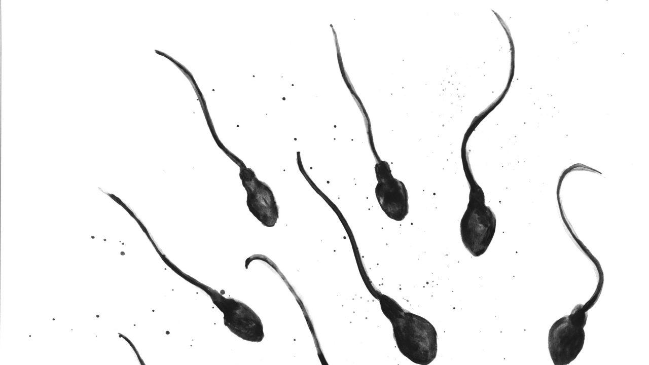 http://montrealcampus.ca/wp-content/uploads/2013/01/spermatos-1280x720.jpg