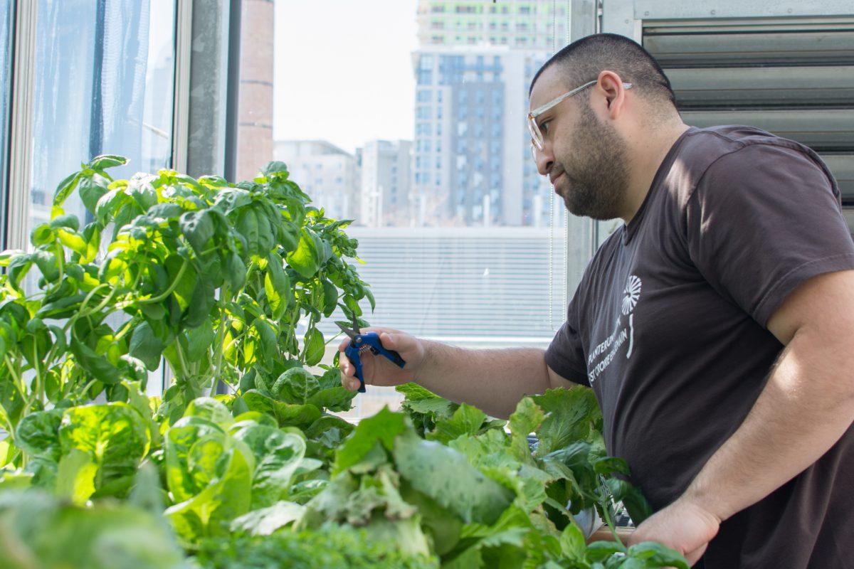 Le fruit social de l'agriculture urbaine