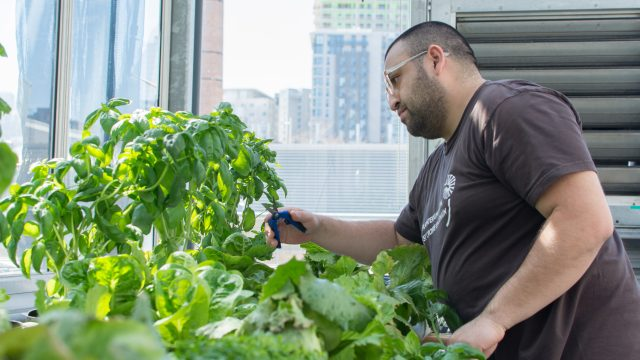 https://montrealcampus.ca/wp-content/uploads/2016/08/S_AgricultureUrbaine-8941-640x360.jpg