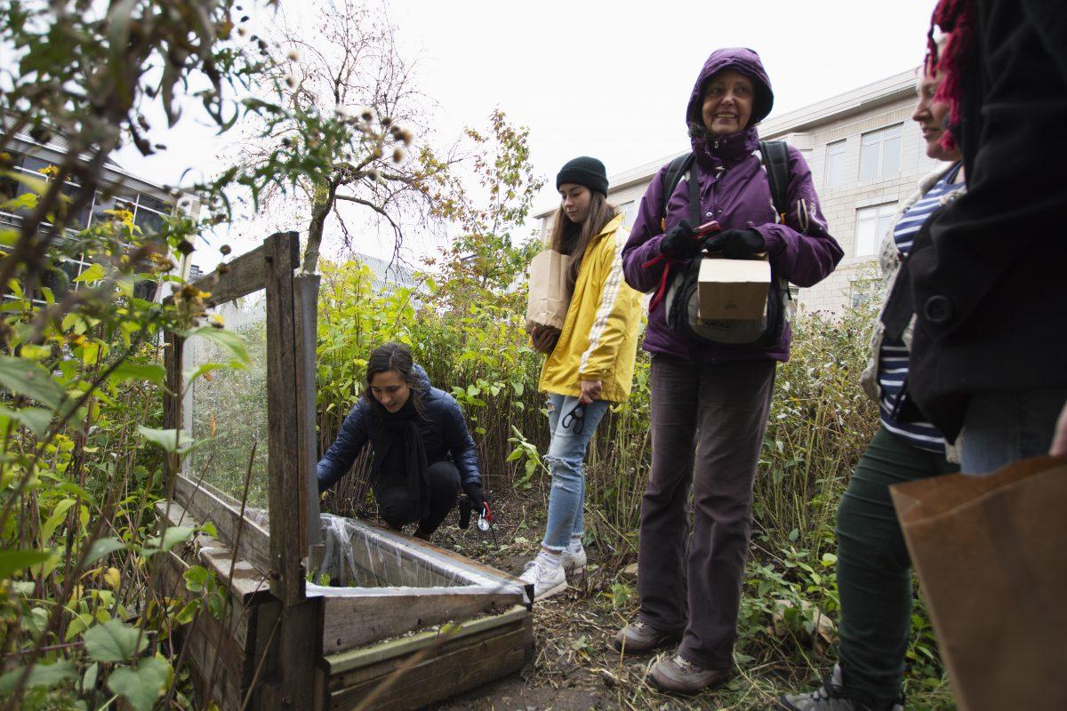 Le CRAPAUD, fleuron de l'agriculture urbaine